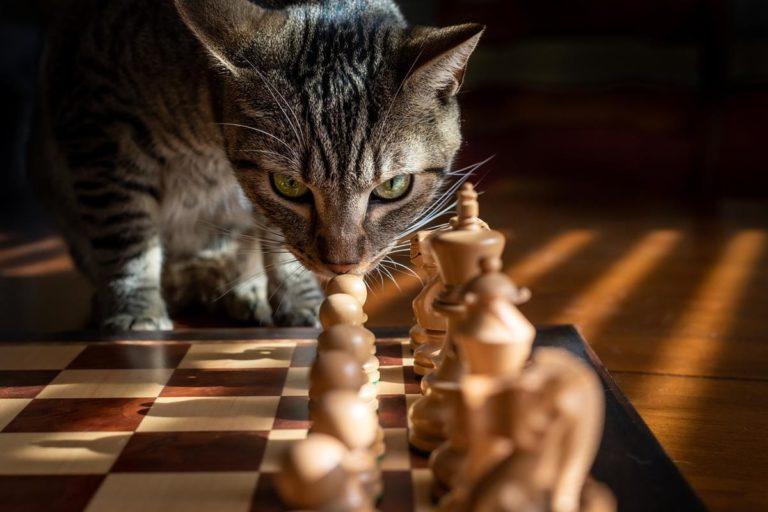 Wszystko, co właściciele kotów muszą wiedzieć